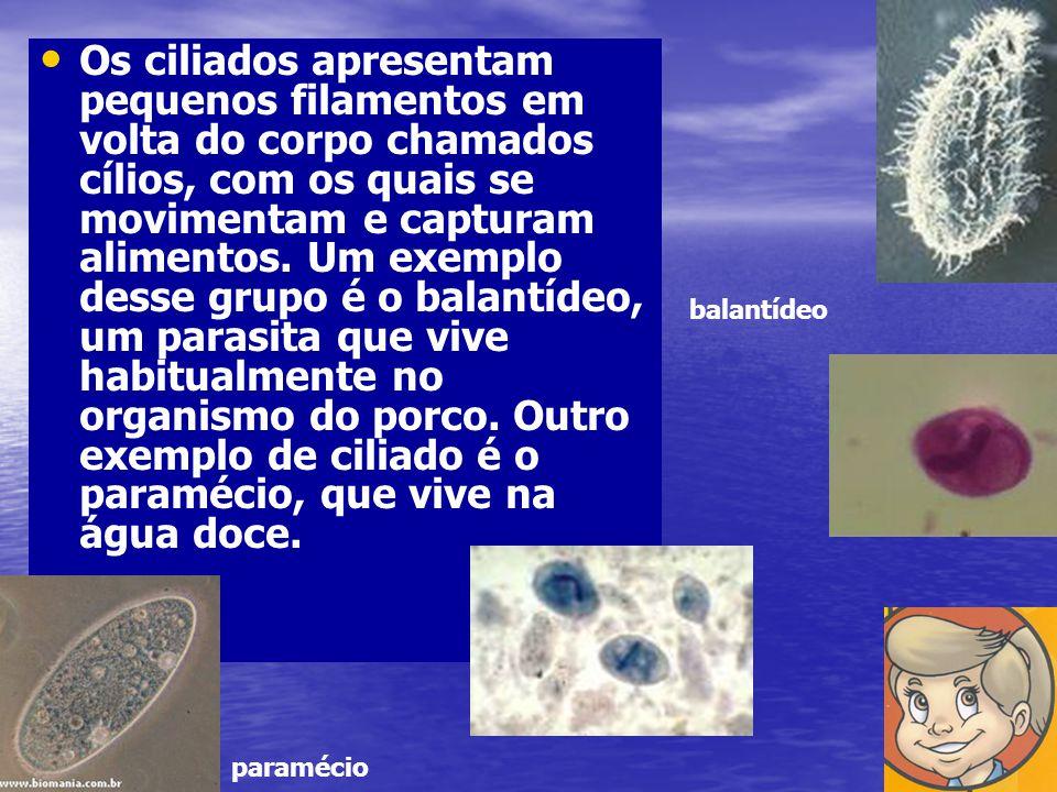 Os ciliados apresentam pequenos filamentos em volta do corpo chamados cílios, com os quais se movimentam e capturam alimentos. Um exemplo desse grupo