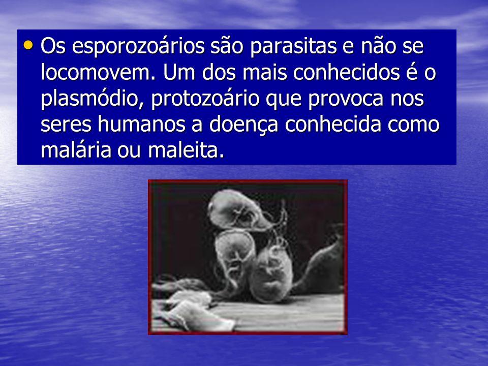 Os esporozoários são parasitas e não se locomovem. Um dos mais conhecidos é o plasmódio, protozoário que provoca nos seres humanos a doença conhecida
