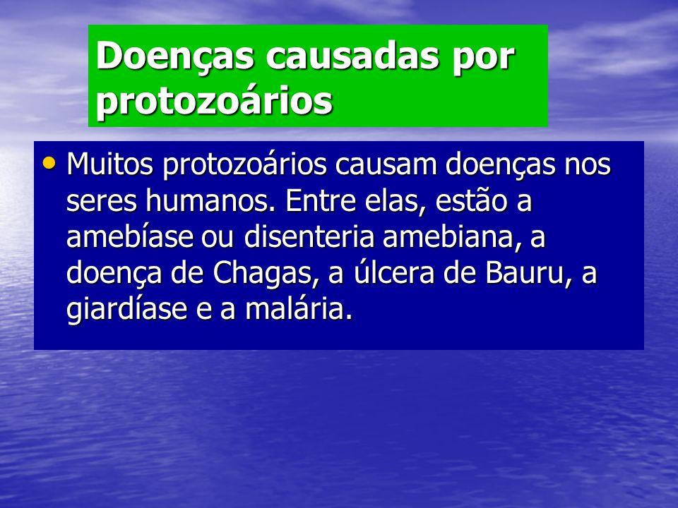 Doenças causadas por protozoários Muitos protozoários causam doenças nos seres humanos. Entre elas, estão a amebíase ou disenteria amebiana, a doença