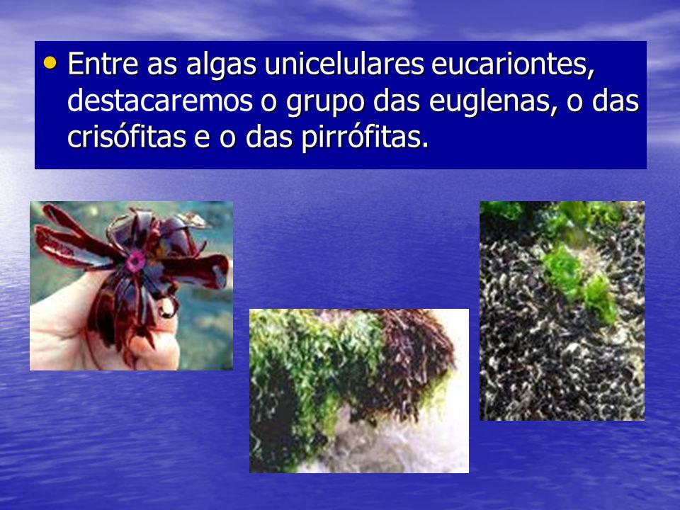 Entre as algas unicelulares eucariontes, o grupo das euglenas, o das crisófitas e o das pirrófitas. Entre as algas unicelulares eucariontes, destacare