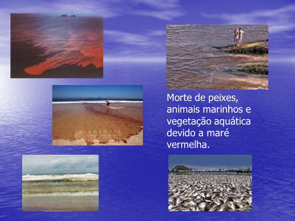 Morte de peixes, animais marinhos e vegetação aquática devido a maré vermelha.