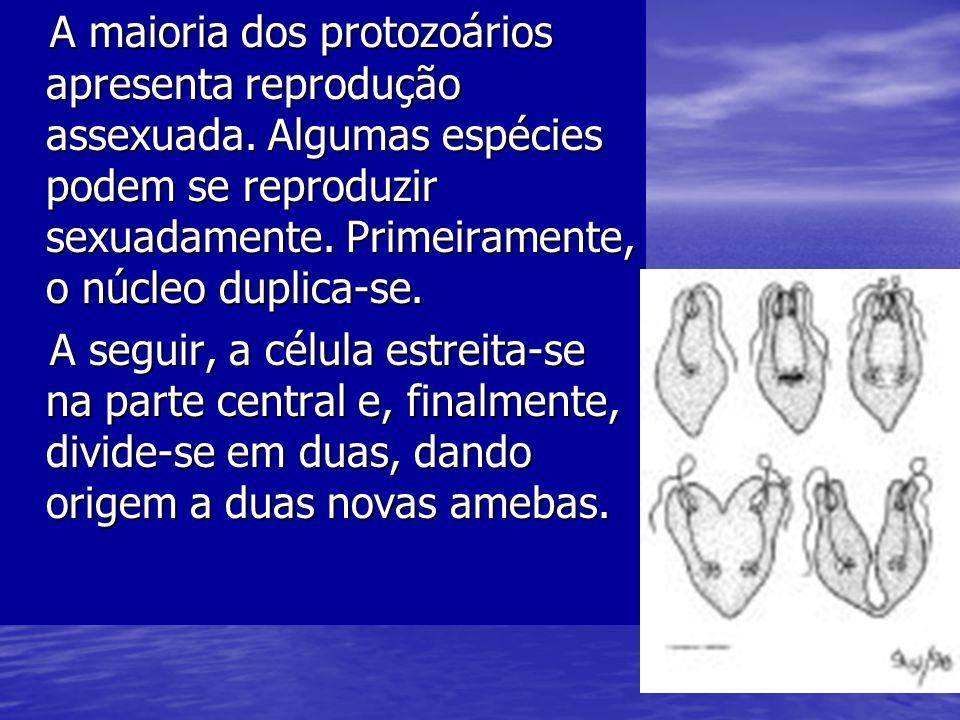 A maioria dos protozoários apresenta reprodução assexuada. Algumas espécies podem se reproduzir sexuadamente. Primeiramente, o núcleo duplica-se. A ma