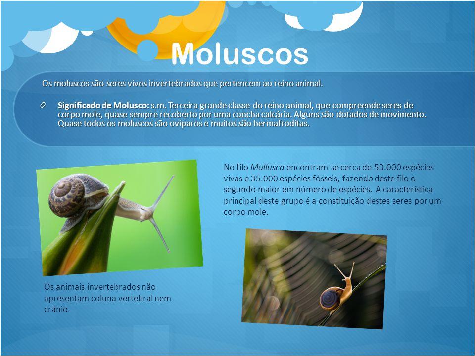 Moluscos Os moluscos são seres vivos invertebrados que pertencem ao reino animal. Os moluscos são seres vivos invertebrados que pertencem ao reino ani