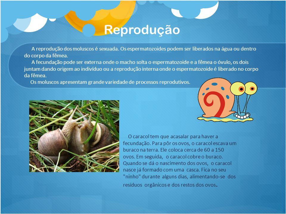 Reprodução A reprodução dos moluscos é sexuada. Os espermatozoides podem ser liberados na água ou dentro do corpo da fêmea. A fecundação pode ser exte