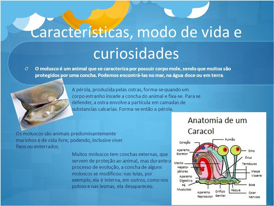 Características, modo de vida e curiosidades. O molusco é um animal que se caracteriza por possuir corpo mole, sendo que muitos são protegidos por uma