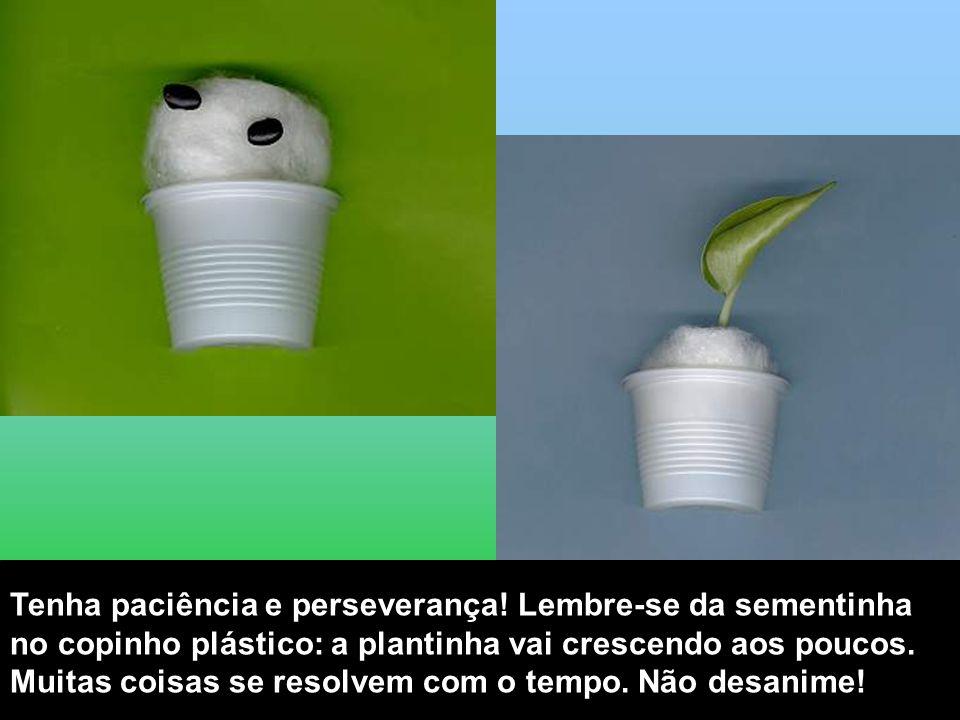Tenha paciência e perseverança! Lembre-se da sementinha no copinho plástico: a plantinha vai crescendo aos poucos. Muitas coisas se resolvem com o tem