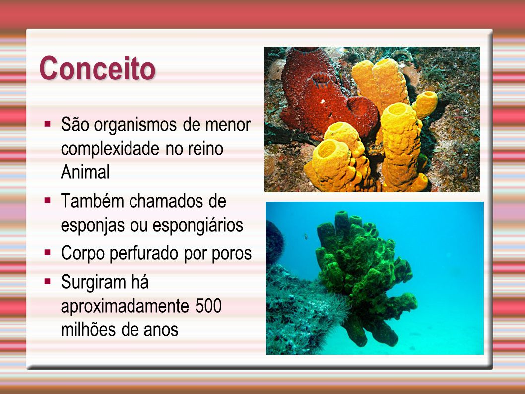 Conceito São organismos de menor complexidade no reino Animal Também chamados de esponjas ou espongiários Corpo perfurado por poros Surgiram há aproxi