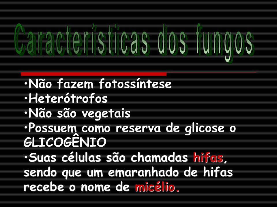 Não fazem fotossíntese Heterótrofos Não são vegetais Possuem como reserva de glicose o GLICOGÊNIO Suas células são chamadas hifas, sendo que um emaranhado de hifas recebe o nome de micélio.