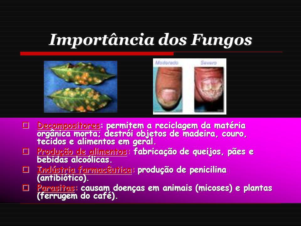 Importância dos Fungos Decompositores: permitem a reciclagem da matéria orgânica morta; destrói objetos de madeira, couro, tecidos e alimentos em geral.
