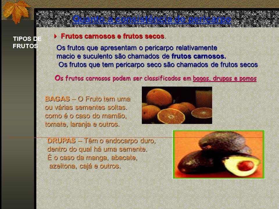 O OO O fruto geralmente é formado de pericarpo e semente. O OO O pericarpo origina-se do ovário da flor que se desenvolve após a fecundação e apresent