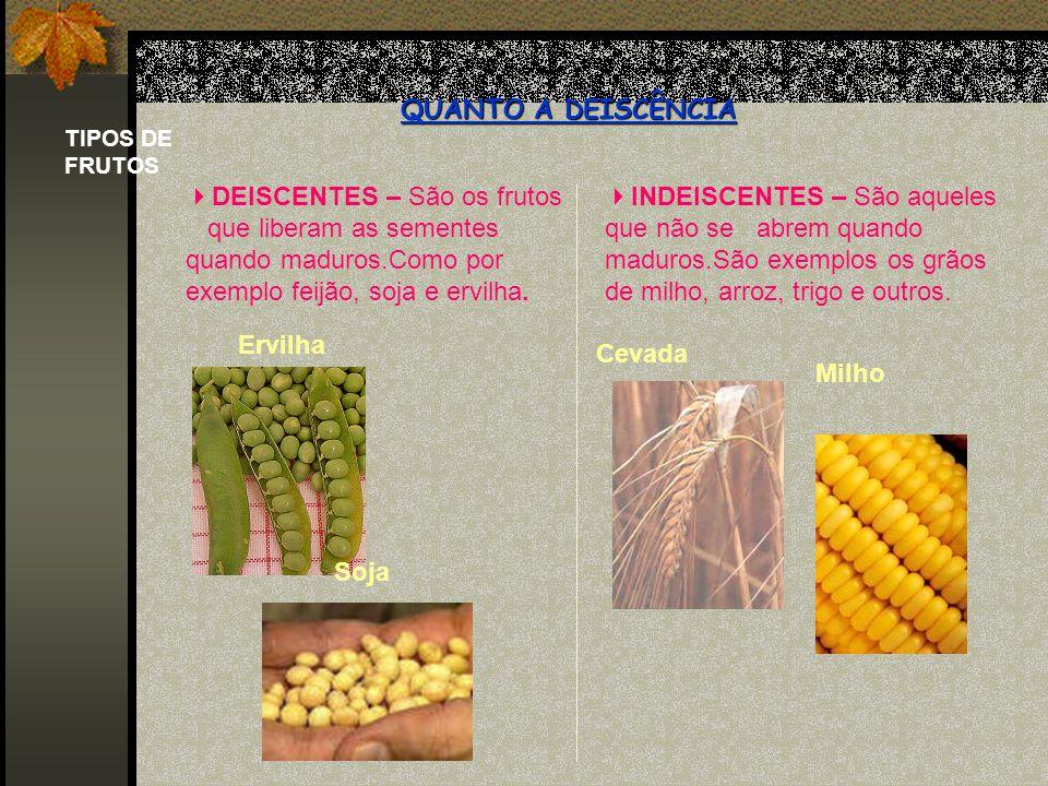 Frutos carnosos e frutos secos.Frutos carnosos e frutos secos.