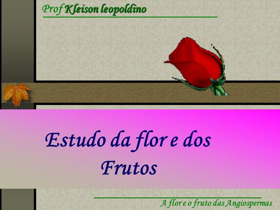 Kleison leopoldino Prof Kleison leopoldino A flor e o fruto das Angiospermas Estudo da flor e dos Frutos