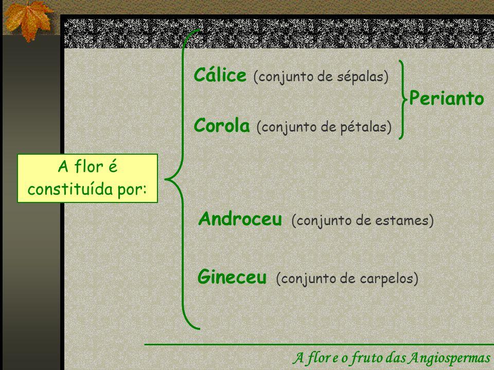A flor é constituída por: Cálice (conjunto de sépalas) Corola (conjunto de pétalas) Androceu (conjunto de estames) Gineceu (conjunto de carpelos) Perianto A flor e o fruto das Angiospermas