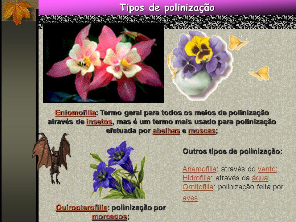 Outros tipos de polinização: Anemofilia: através do vento; Hidrofilia: através da água; Ornitofilia: polinização feita por aves.