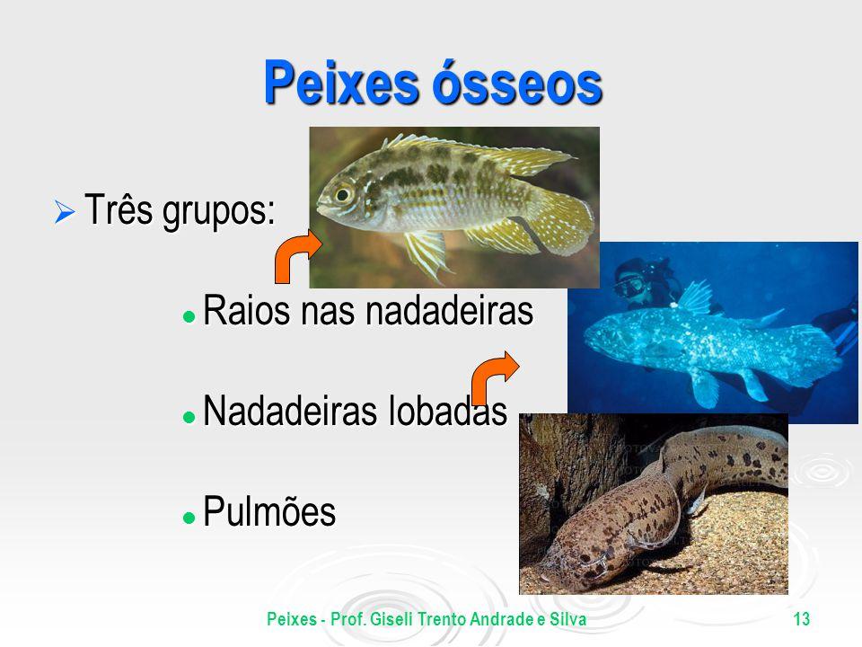 Peixes - Prof. Giseli Trento Andrade e Silva13 Peixes ósseos Três grupos: Três grupos: Raios nas nadadeiras Raios nas nadadeiras Nadadeiras lobadas Na