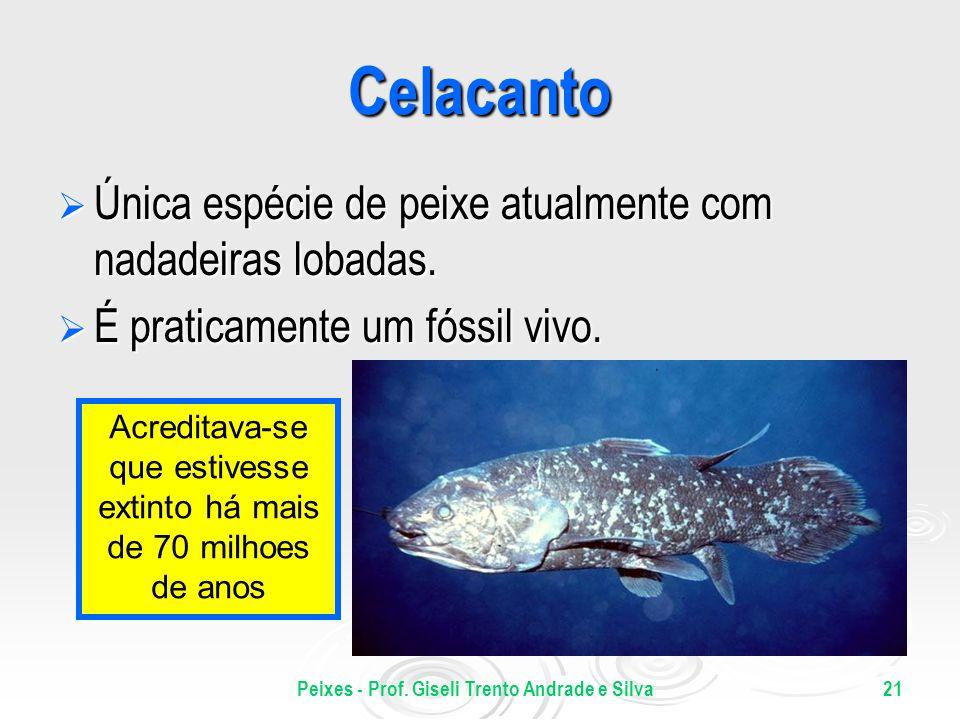 Peixes - Prof. Giseli Trento Andrade e Silva21 Celacanto Única espécie de peixe atualmente com nadadeiras lobadas. Única espécie de peixe atualmente c