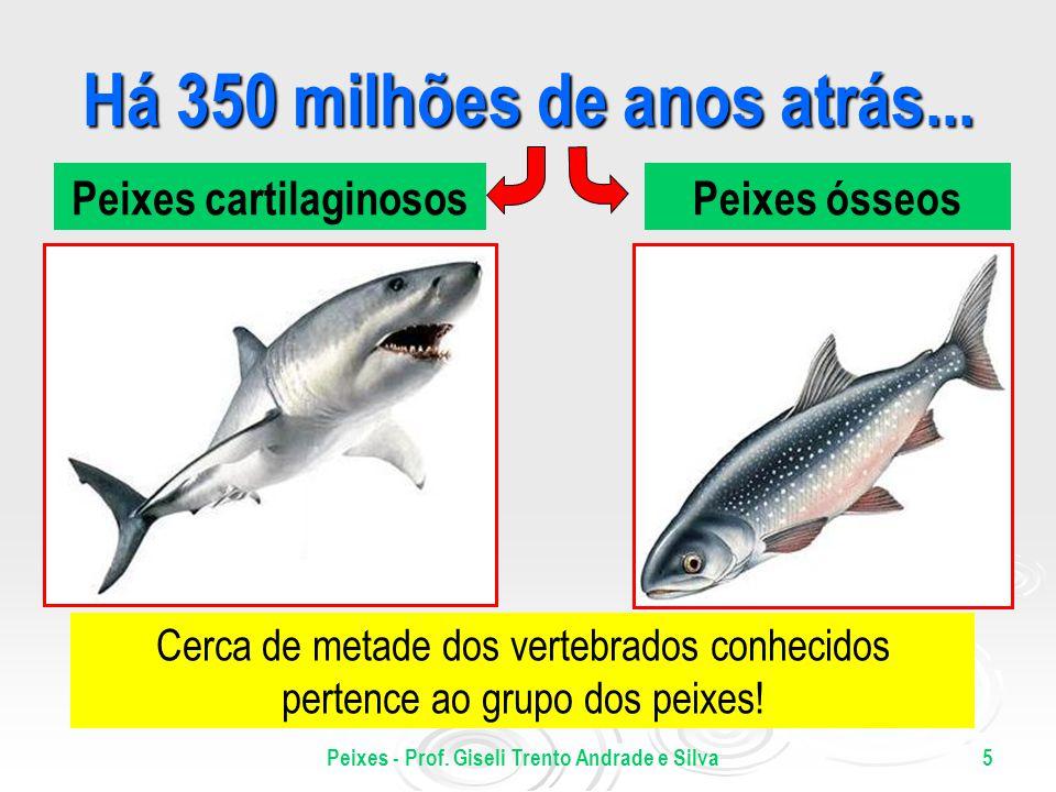 Peixes - Prof. Giseli Trento Andrade e Silva5 Há 350 milhões de anos atrás... Peixes cartilaginososPeixes ósseos Cerca de metade dos vertebrados conhe