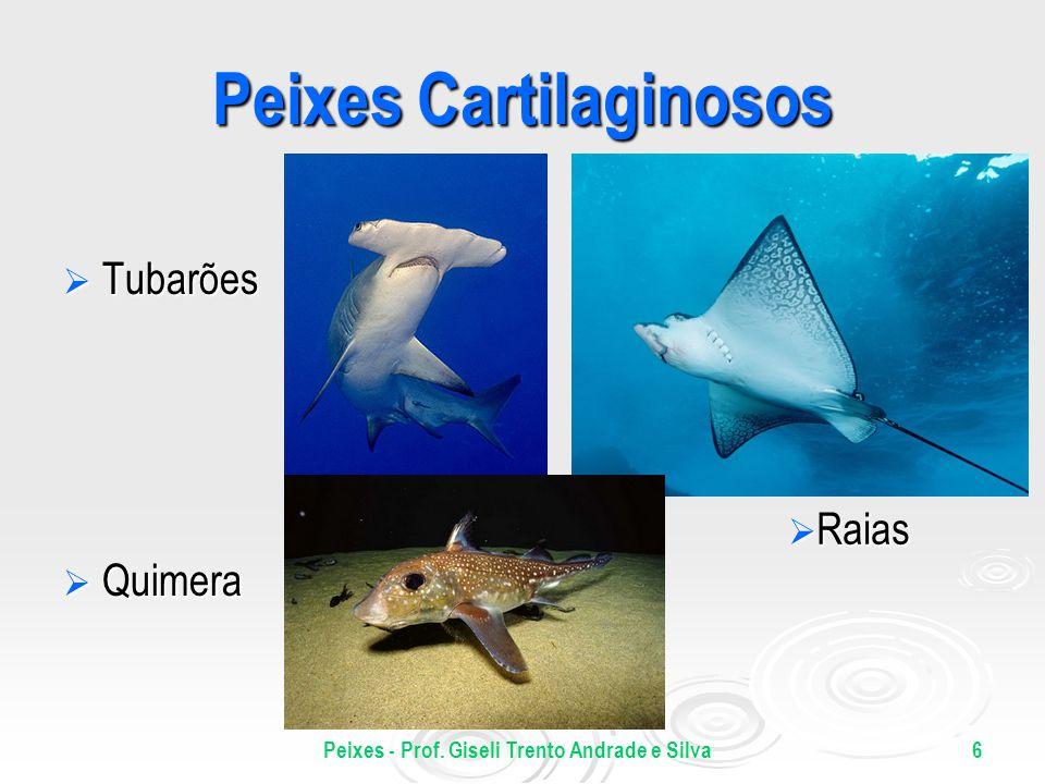 Peixes - Prof. Giseli Trento Andrade e Silva6 Peixes Cartilaginosos Tubarões Tubarões Quimera Quimera Raias Raias