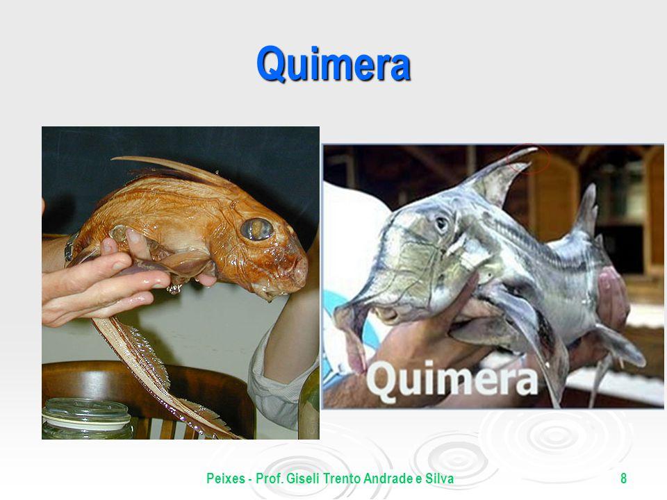 Peixes - Prof. Giseli Trento Andrade e Silva8 Quimera
