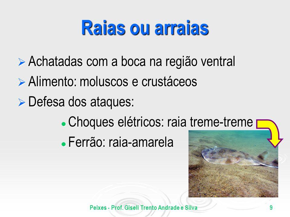 9 Raias ou arraias Achatadas com a boca na região ventral Achatadas com a boca na região ventral Alimento: moluscos e crustáceos Alimento: moluscos e