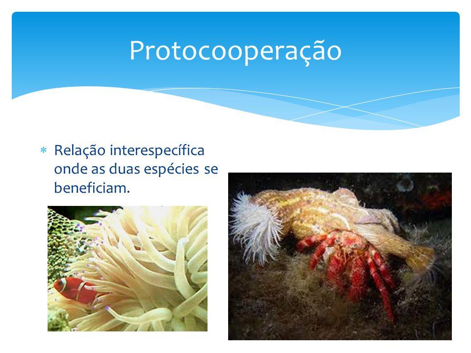 Protocooperação Relação interespecífica onde as duas espécies se beneficiam.
