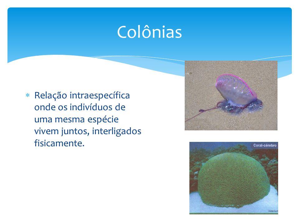 Colônias Relação intraespecífica onde os indivíduos de uma mesma espécie vivem juntos, interligados fisicamente.