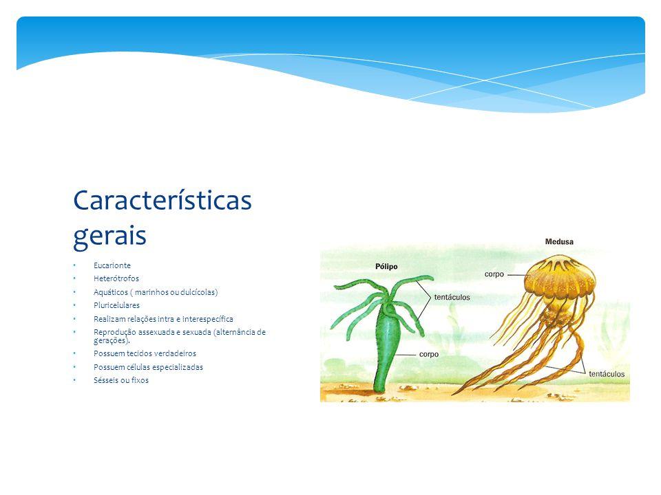 Eucarionte Heterótrofos Aquáticos ( marinhos ou dulcícolas) Pluricelulares Realizam relações intra e interespecífica Reprodução assexuada e sexuada (alternância de gerações).