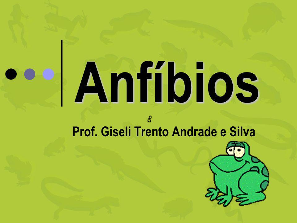 Anfíbios Prof. Giseli Trento Andrade e Silva