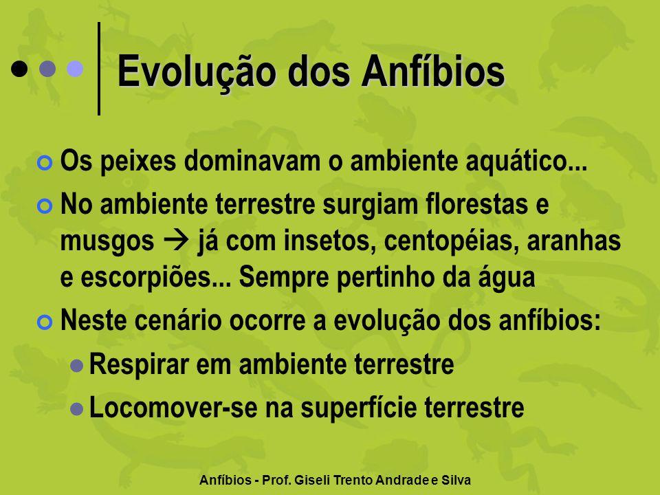 Evolução dos Anfíbios Os peixes dominavam o ambiente aquático... No ambiente terrestre surgiam florestas e musgos já com insetos, centopéias, aranhas