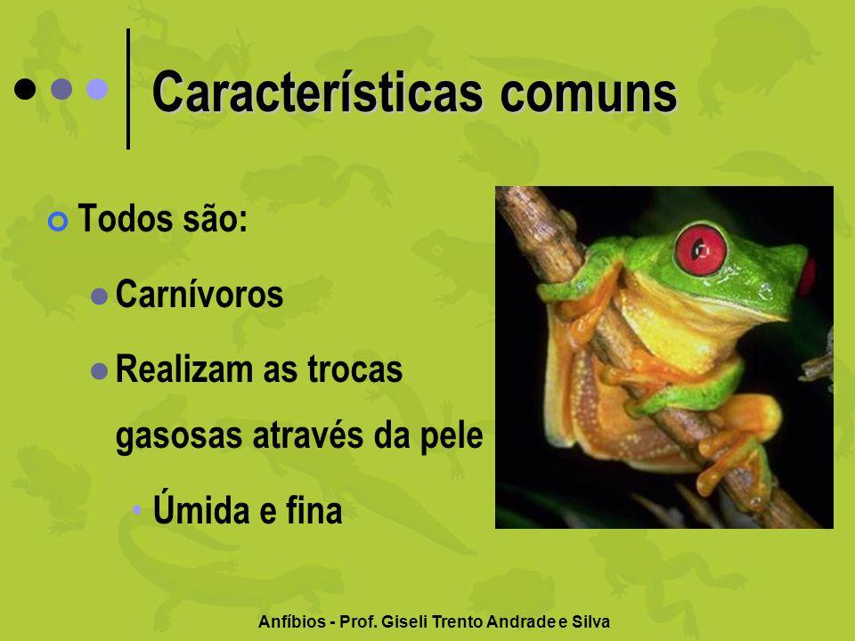 Anfíbios - Prof. Giseli Trento Andrade e Silva Características comuns Todos são: Carnívoros Realizam as trocas gasosas através da pele Úmida e fina