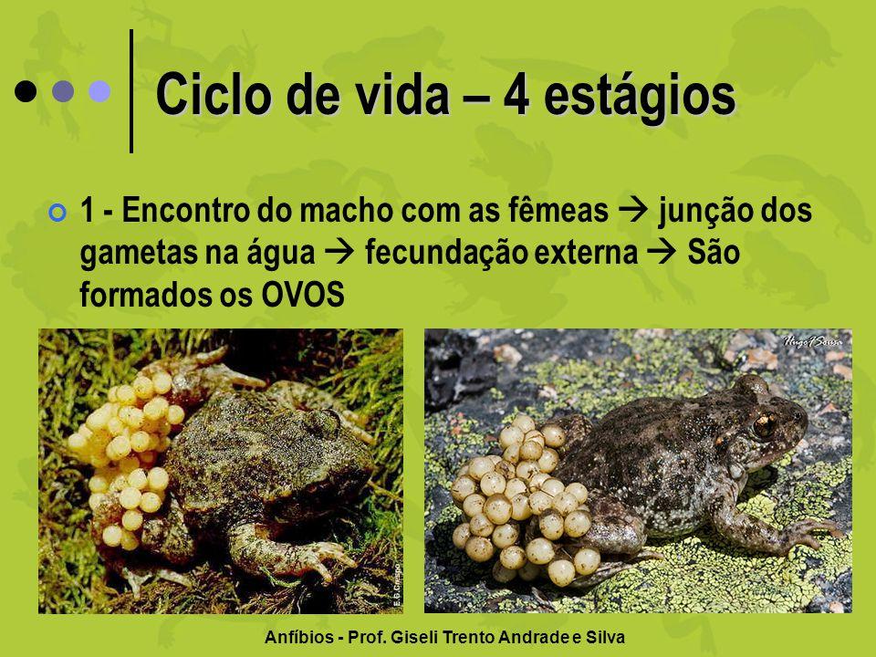 Ciclo de vida – 4 estágios 1 - Encontro do macho com as fêmeas junção dos gametas na água fecundação externa São formados os OVOS