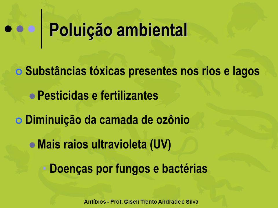 Anfíbios - Prof. Giseli Trento Andrade e Silva Poluição ambiental Substâncias tóxicas presentes nos rios e lagos Pesticidas e fertilizantes Diminuição
