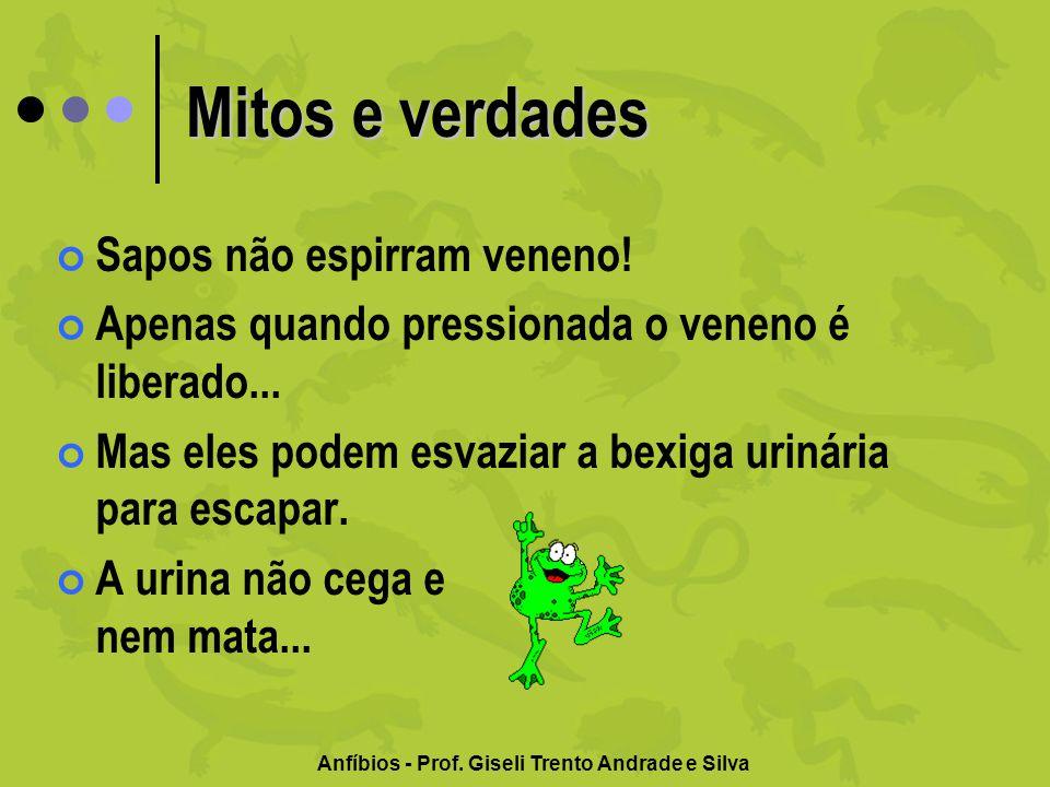 Anfíbios - Prof. Giseli Trento Andrade e Silva Mitos e verdades Sapos não espirram veneno! Apenas quando pressionada o veneno é liberado... Mas eles p