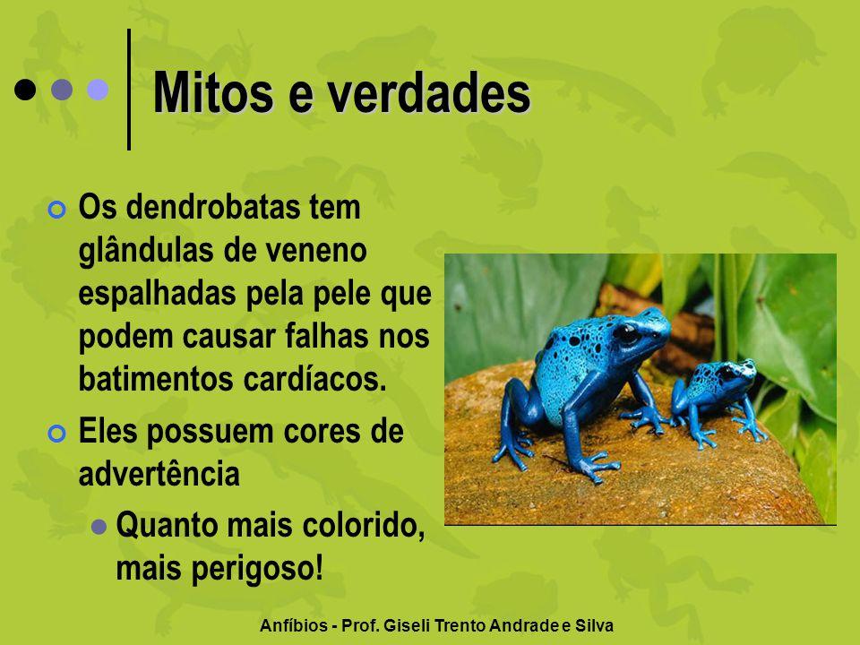 Anfíbios - Prof. Giseli Trento Andrade e Silva Mitos e verdades Os dendrobatas tem glândulas de veneno espalhadas pela pele que podem causar falhas no