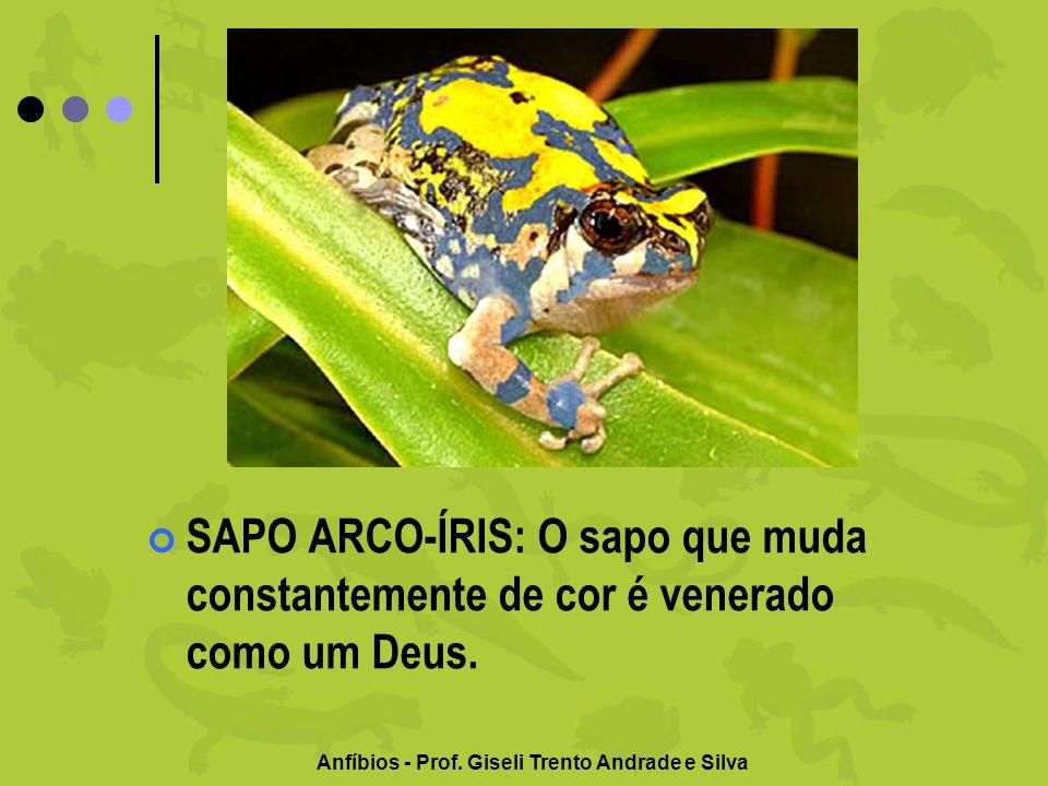 Anfíbios - Prof. Giseli Trento Andrade e Silva SAPO ARCO-ÍRIS: O sapo que muda constantemente de cor é venerado como um Deus.