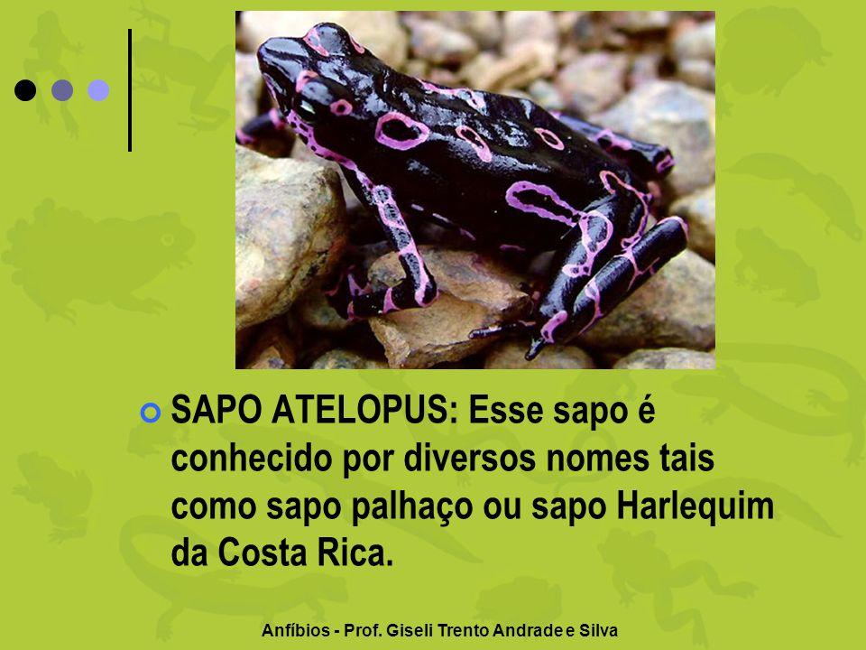 Anfíbios - Prof. Giseli Trento Andrade e Silva SAPO ATELOPUS: Esse sapo é conhecido por diversos nomes tais como sapo palhaço ou sapo Harlequim da Cos