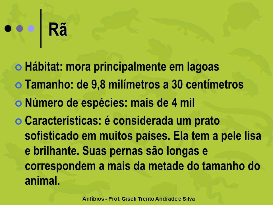 Anfíbios - Prof.Giseli Trento Andrade e Silva A rã-golias é um dos maiores anfíbios da terra.