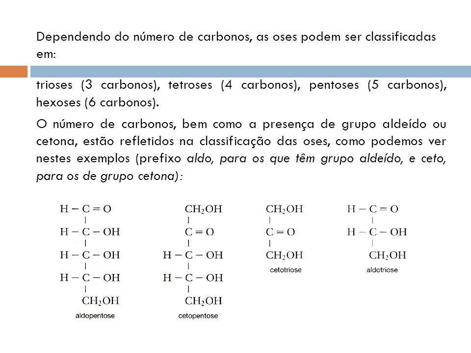 Dependendo do número de carbonos, as oses podem ser classificadas em: trioses (3 carbonos), tetroses (4 carbonos), pentoses (5 carbonos), hexoses (6 c