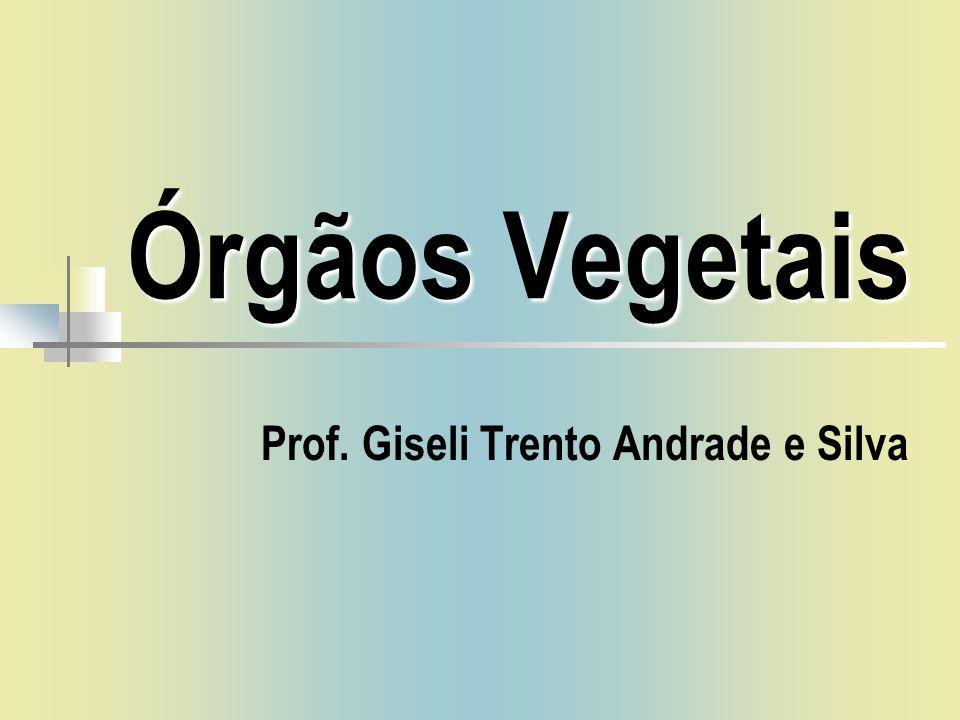 Órgãos Vegetais Prof. Giseli Trento Andrade e Silva