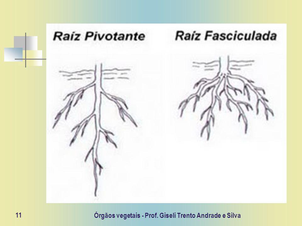 Órgãos vegetais - Prof. Giseli Trento Andrade e Silva 11