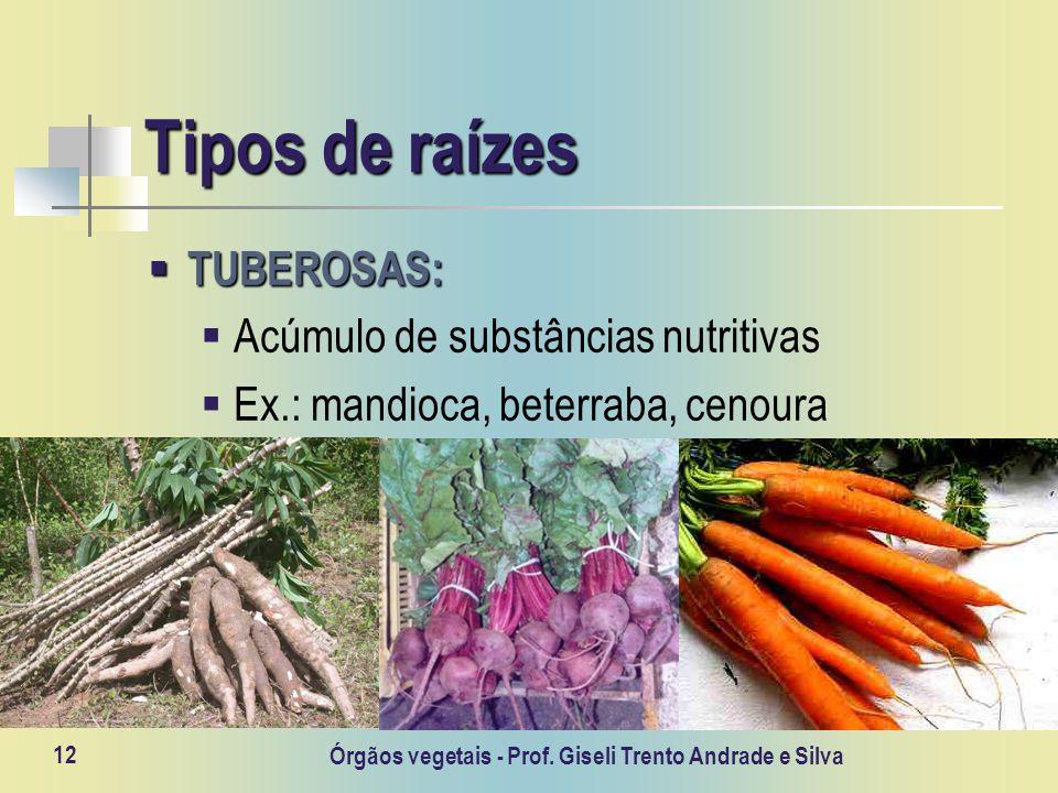 Órgãos vegetais - Prof. Giseli Trento Andrade e Silva 12 Tipos de raízes TUBEROSAS: TUBEROSAS: Acúmulo de substâncias nutritivas Ex.: mandioca, beterr