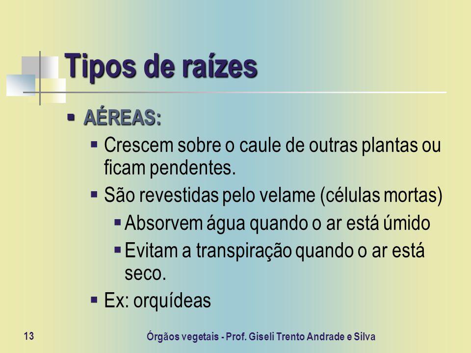 Órgãos vegetais - Prof. Giseli Trento Andrade e Silva 13 Tipos de raízes AÉREAS: AÉREAS: Crescem sobre o caule de outras plantas ou ficam pendentes. S