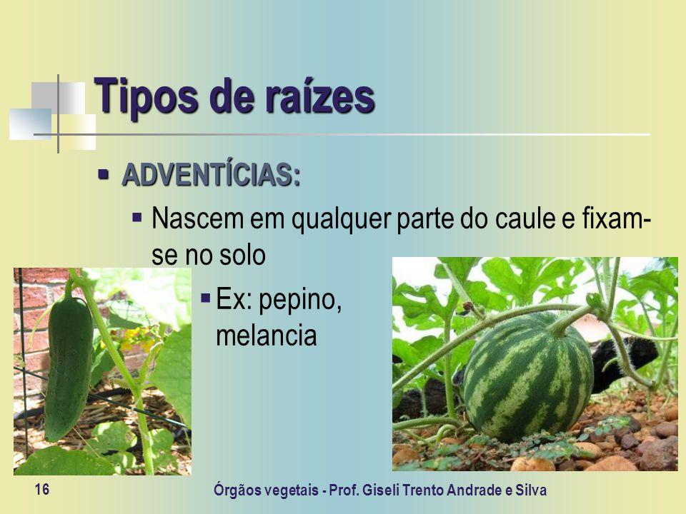 Órgãos vegetais - Prof. Giseli Trento Andrade e Silva 16 Tipos de raízes ADVENTÍCIAS: ADVENTÍCIAS: Nascem em qualquer parte do caule e fixam- se no so
