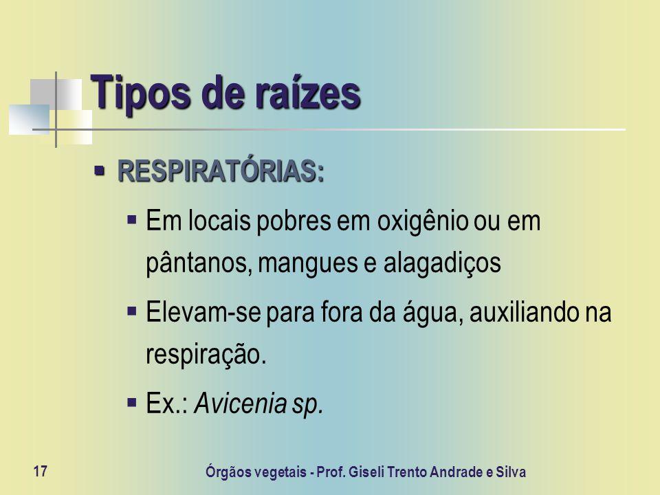 Órgãos vegetais - Prof. Giseli Trento Andrade e Silva 17 Tipos de raízes RESPIRATÓRIAS: RESPIRATÓRIAS: Em locais pobres em oxigênio ou em pântanos, ma