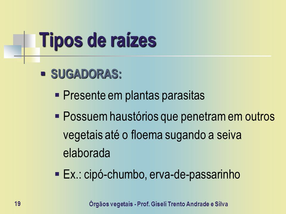 Órgãos vegetais - Prof. Giseli Trento Andrade e Silva 19 Tipos de raízes SUGADORAS: SUGADORAS: Presente em plantas parasitas Possuem haustórios que pe