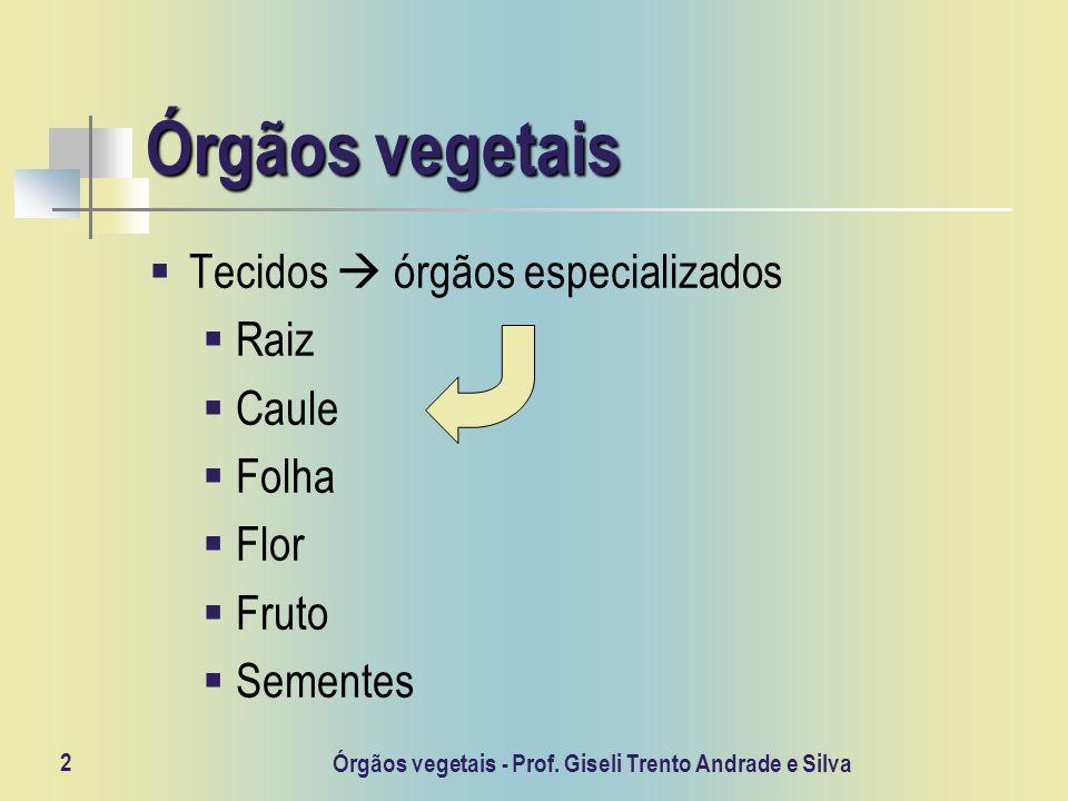 Órgãos vegetais - Prof. Giseli Trento Andrade e Silva 2 Órgãos vegetais Tecidos órgãos especializados Raiz Caule Folha Flor Fruto Sementes