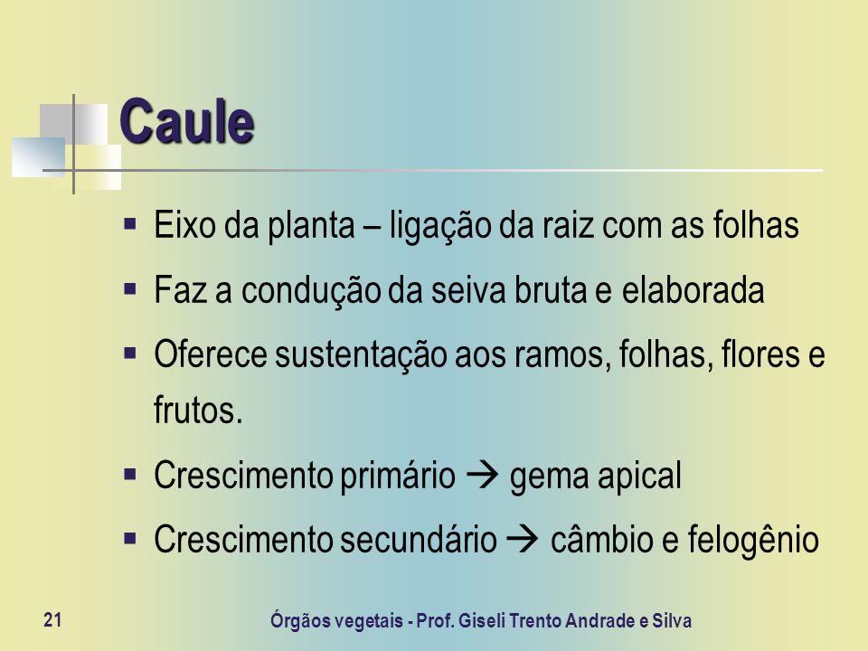 Órgãos vegetais - Prof. Giseli Trento Andrade e Silva 21 Caule Eixo da planta – ligação da raiz com as folhas Faz a condução da seiva bruta e elaborad