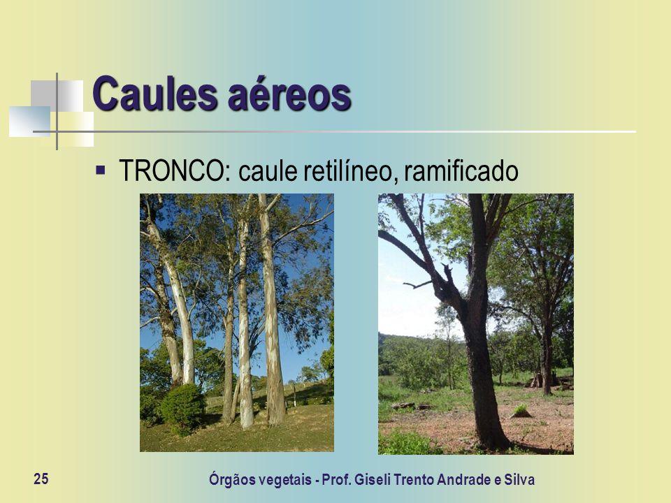 Órgãos vegetais - Prof. Giseli Trento Andrade e Silva 25 Caules aéreos TRONCO: caule retilíneo, ramificado