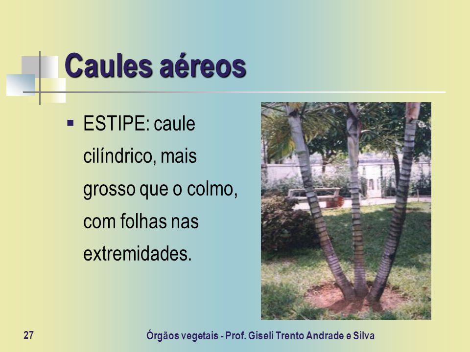 Órgãos vegetais - Prof. Giseli Trento Andrade e Silva 27 Caules aéreos ESTIPE: caule cilíndrico, mais grosso que o colmo, com folhas nas extremidades.