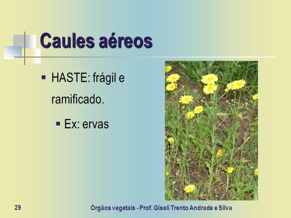 Órgãos vegetais - Prof. Giseli Trento Andrade e Silva 29 Caules aéreos HASTE: frágil e ramificado. Ex: ervas